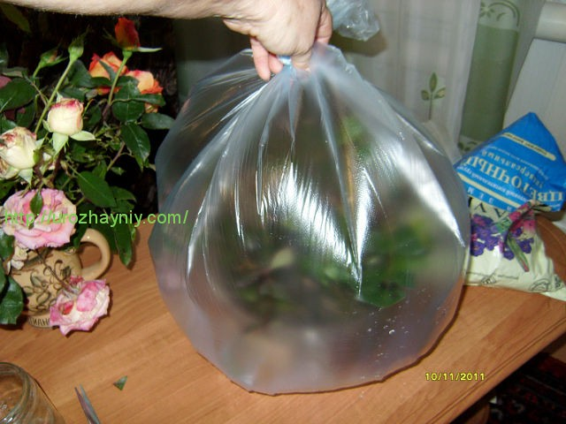 Комнатные растения уход гардения за