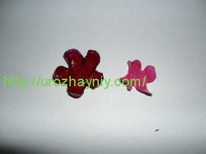 Комнатные цветы из пластиковых бутылок