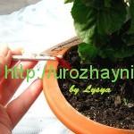 Полив комнатных растений во время отпуска