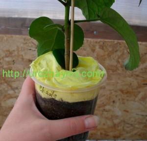 Как упаковать растения для пересылки