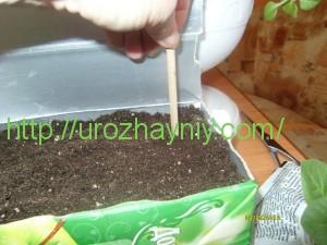 Размножение петунии черенками