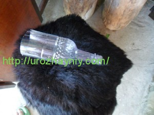 Фуксия из пластиковых бутылок