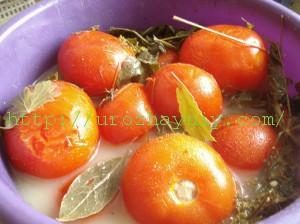 помидоры бочковые