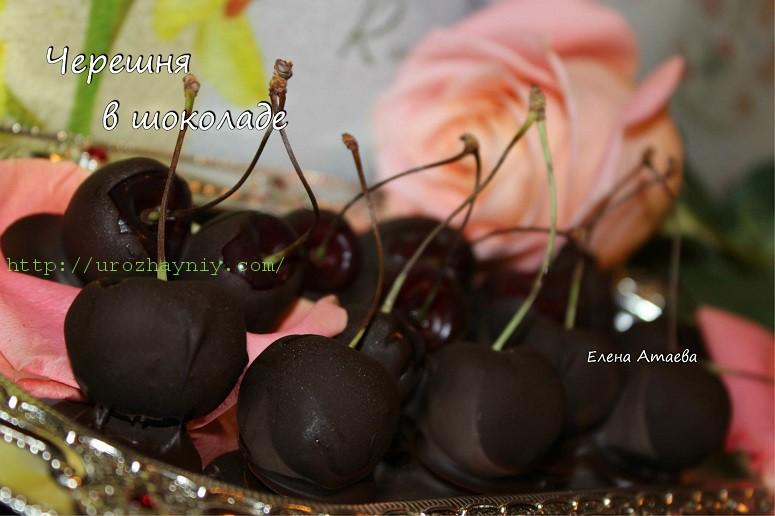 Черешня в шоколаде